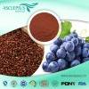 Grape seeds extract powder
